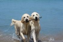 """La spiaggia """"da cani"""", per gli amici a quattro zampe"""